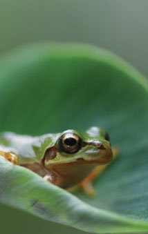 Image of a tropical frog
